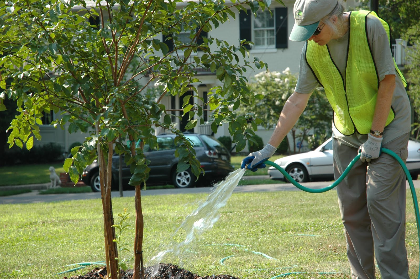 What You Should Know About Tree Care