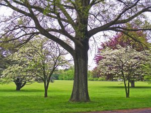Healthy Trees from the Ground Up