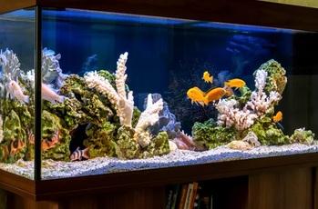 Building a 120 Gallon Aquarium Information